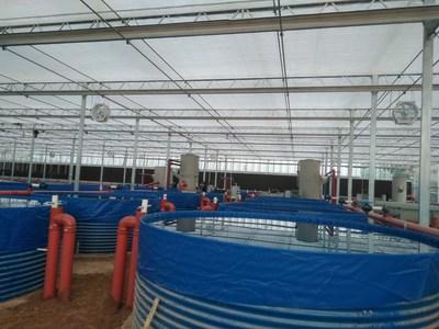 BioFishency筹集240万美元资金用于水产养殖的水竞博电竞官网首页